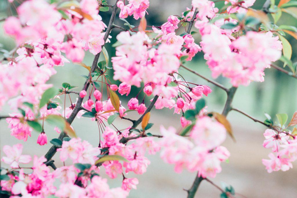 【カメラ初心者必見】今年こそは失敗しない!桜をおしゃれに撮る14の方法