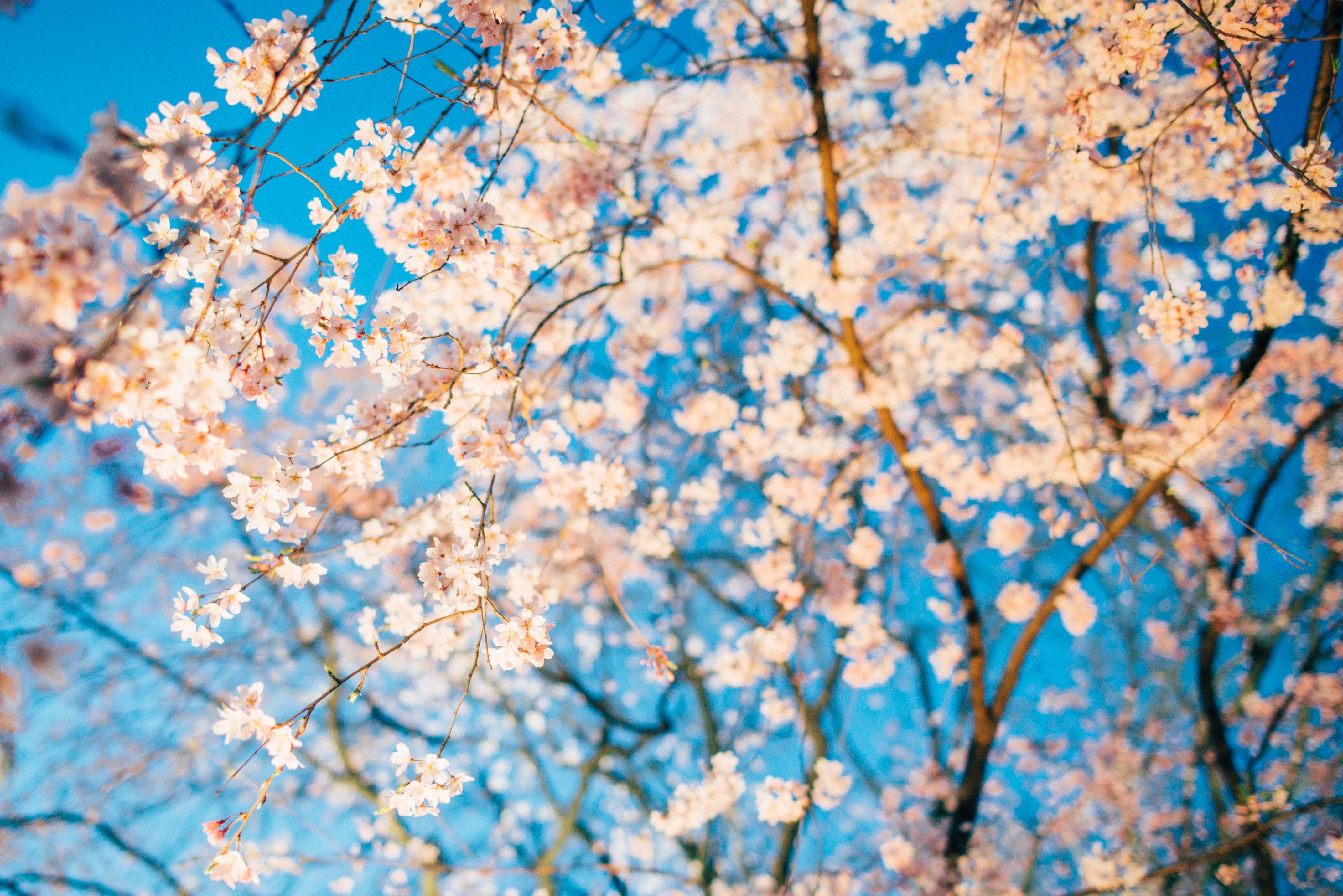 """しだれ桜がライトアップして最高にキレイ!""""六義園""""の夜桜攻略法"""
