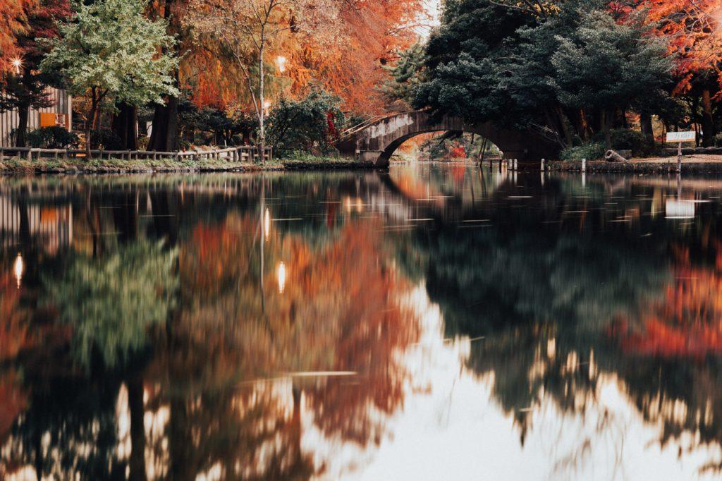 近所の石神井公園に紅葉を撮影しにいってみました