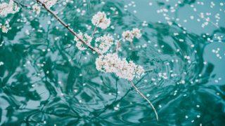 【2018年】今年撮った桜の写真をさらしていきます!