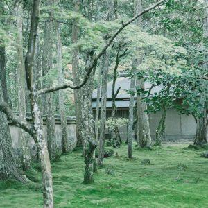 苔に覆われた神秘的な世界。京都「西芳寺」の行き方や魅力を伝えます!